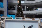 [포토뉴스] 텃새 황새, 새 보금자리에서 비상의 날개를 펼치다!
