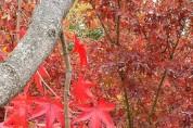 [포토] 오색 단풍 가득한 독립기념관 단풍나무숲길